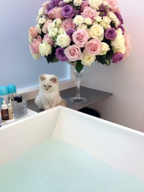 Karl Lagerfeld s bathroom and kitten Choupette