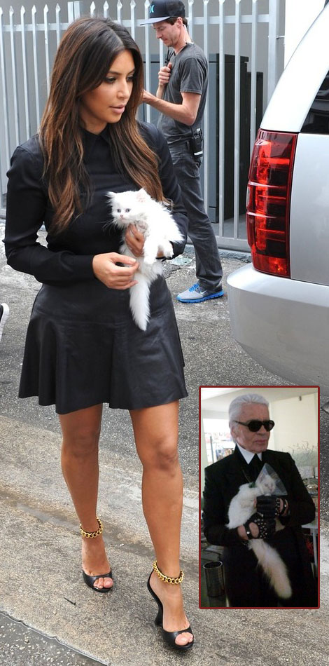 The Trendiest Accessory: A White Kitty (Kim Kardashian's Kitty)