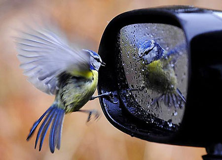 Bird Car Mirror