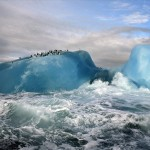 Blue iceberg penguins