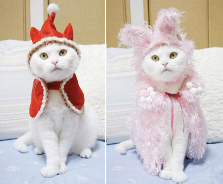 Cat Prin the Tailor of a Cat cat clothes 2