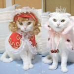 Cat Prin the Tailor of a Cat cat clothes 3