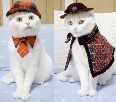 Cat Prin the Tailor of a Cat cat clothes 4