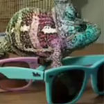 Fashion Chameleon