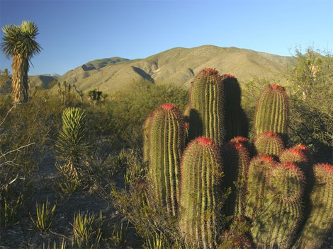Chihuahua Desert photo by George Grall