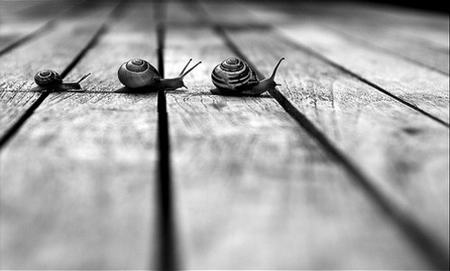 Crossing Lines three Snails Photo