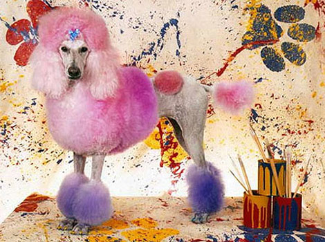 Dog pink Grooming