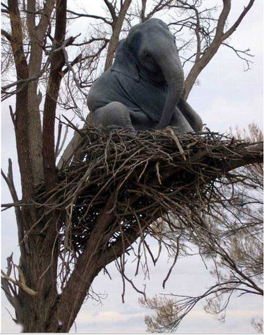 Elephant Tree nest