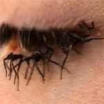 Flies legs False eyelashes