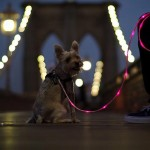 gadgets for pets illuminated leash