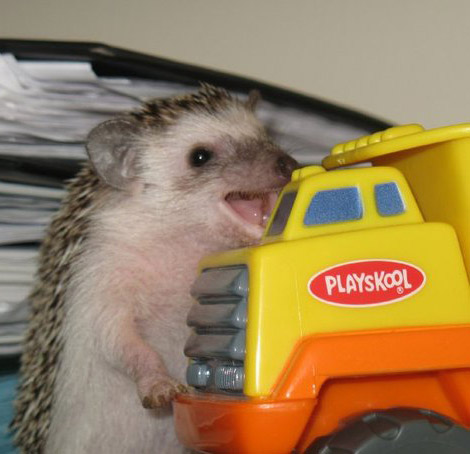 happy-hedgehog.jpg