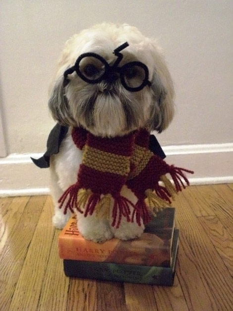 Harry Potter doggy