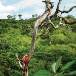 Karlie Kloss in a tree for T Travel