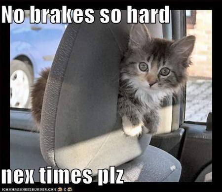 Kitten in car