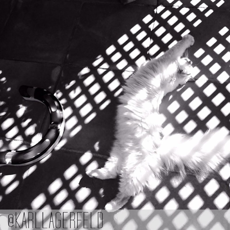 Lagerfeld s cat Choupette latest picture