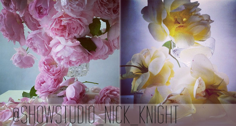 Nick Knight flowers photography roses