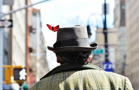 Orange Butterfly on a gray hat