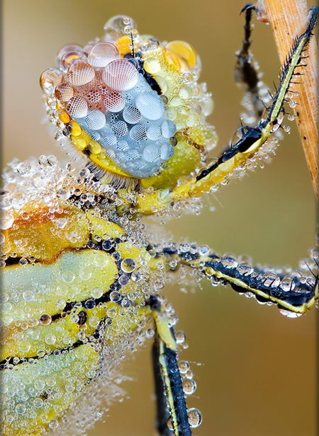 The Dew &#8211; Amazing Photo