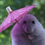 Purple Umbrella mouse