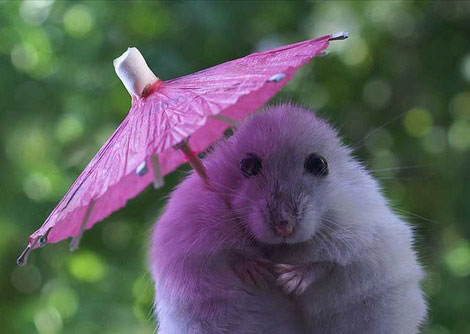Care For A Purple Umbrella?