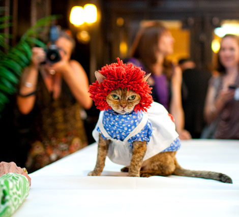 Cats Fashion Show. Good Or Bad?